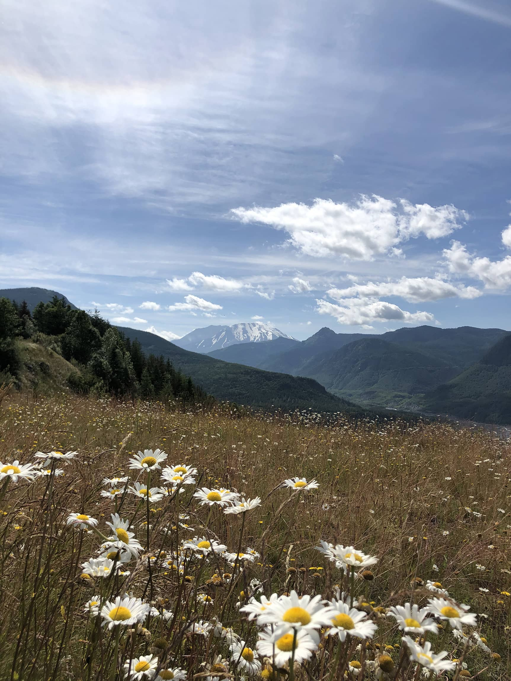 Photo of Mount Saint Helens with wildflowers