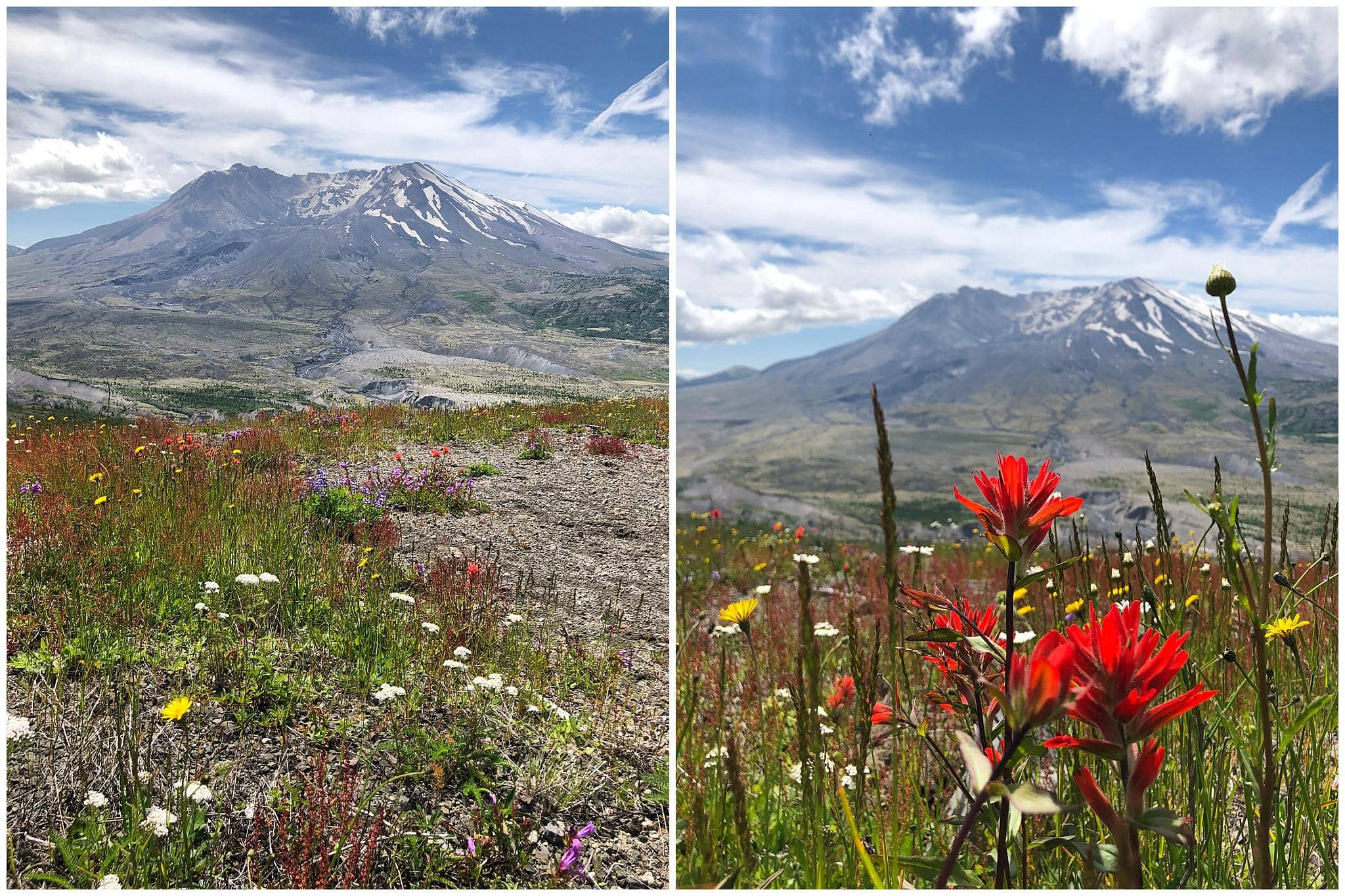 Wildflowers and Mount Saint Helens