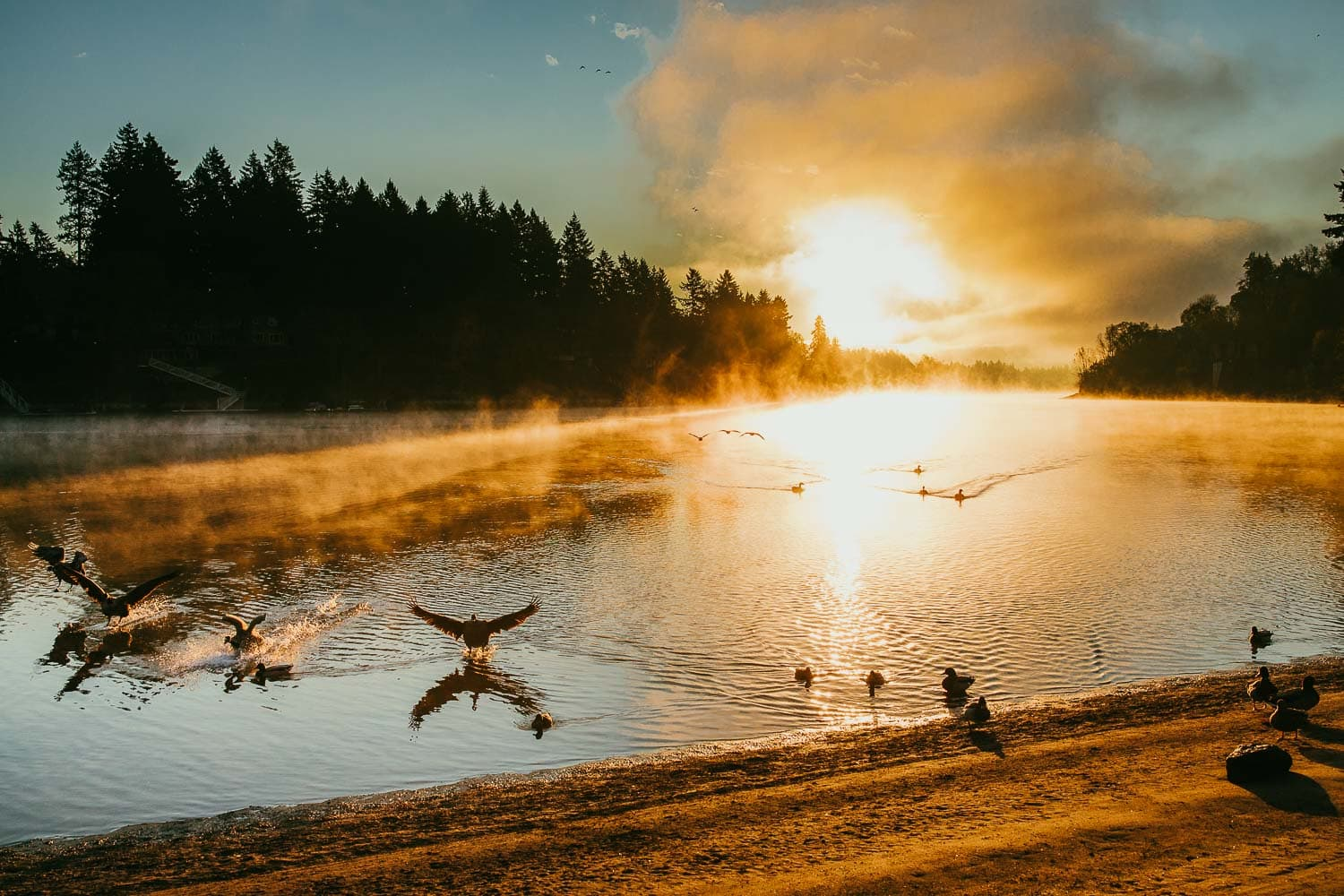 landscape image of the sun rising over a river with ducks